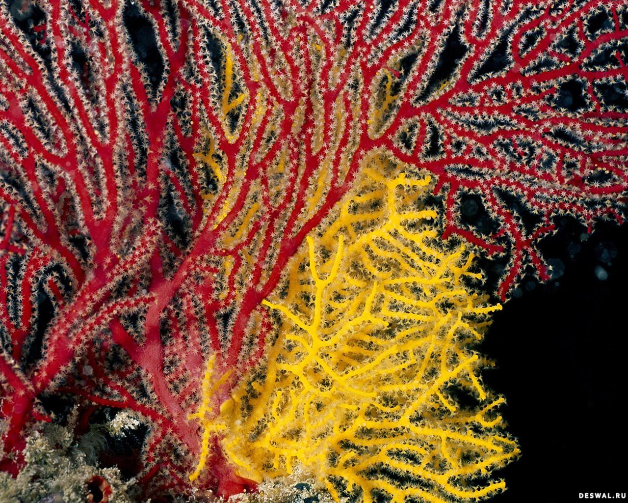 Фото 72. Нажмите на картинку с обоями подводного мира, чтобы просмотреть ее в реальном размере