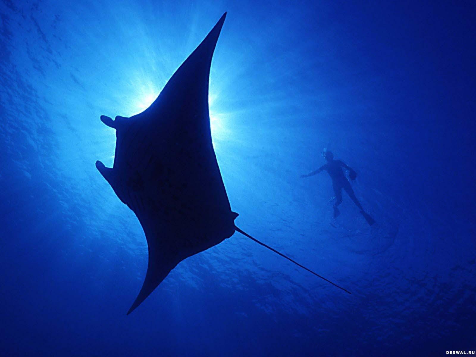 Фото 9. Нажмите на картинку с обоями подводного мира, чтобы просмотреть ее в реальном размере