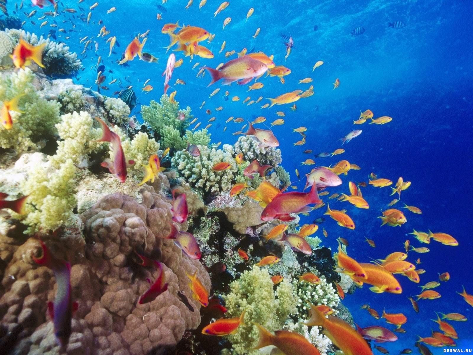 Фото 19. Нажмите на картинку с обоями подводного мира, чтобы просмотреть ее в реальном размере