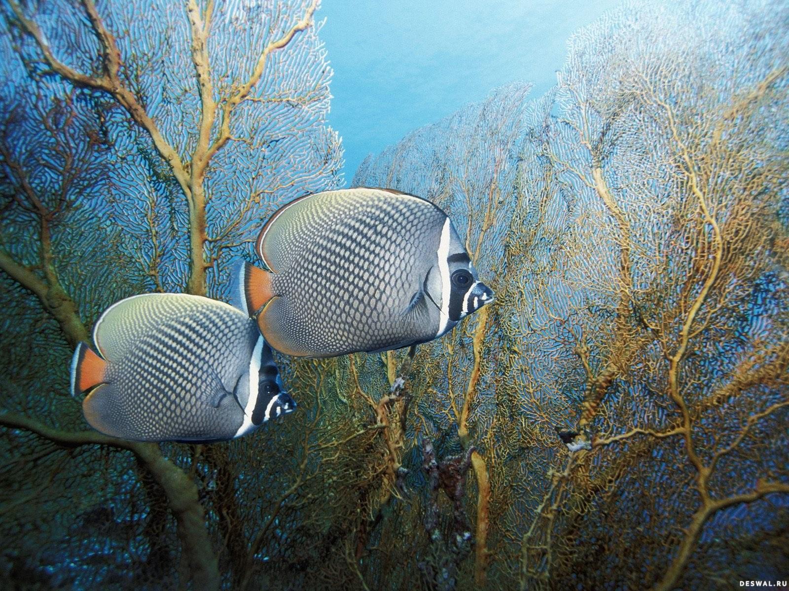 Фото 25. Нажмите на картинку с обоями подводного мира, чтобы просмотреть ее в реальном размере