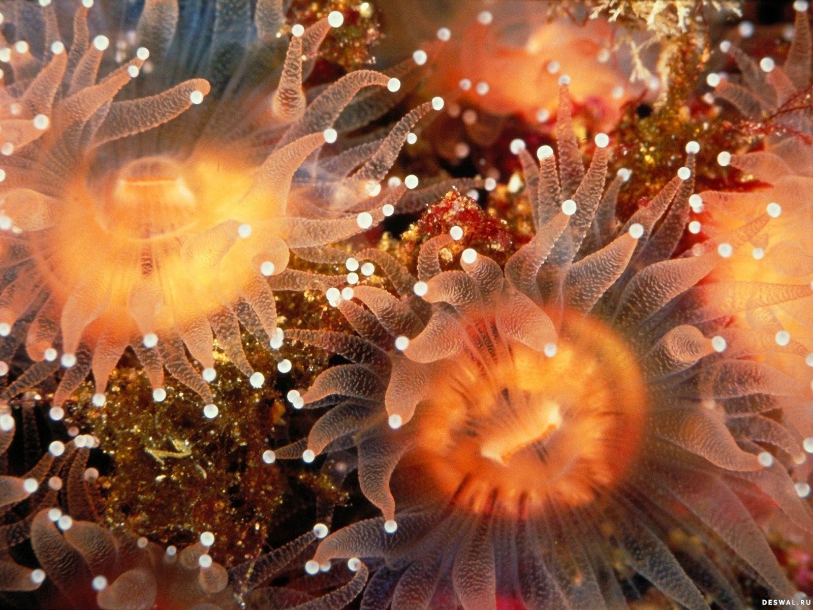 Фото 28. Нажмите на картинку с обоями подводного мира, чтобы просмотреть ее в реальном размере