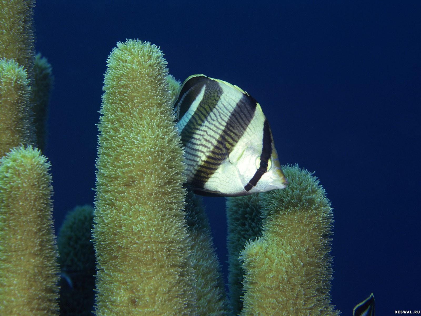 Фото 47. Нажмите на картинку с обоями подводного мира, чтобы просмотреть ее в реальном размере