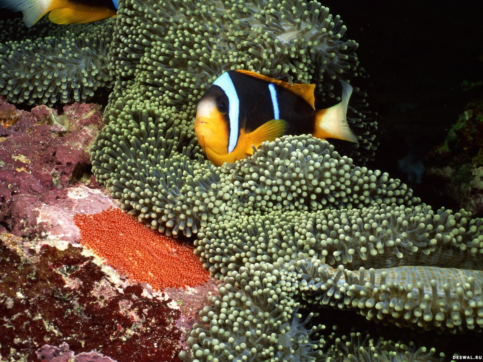 Фото 48. Нажмите на картинку с обоями подводного мира, чтобы просмотреть ее в реальном размере