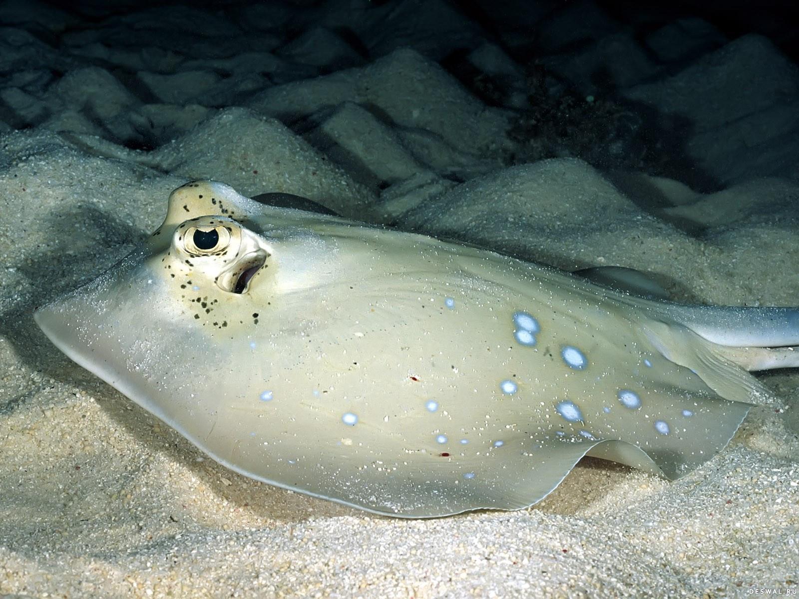 Фото 70. Нажмите на картинку с обоями подводного мира, чтобы просмотреть ее в реальном размере