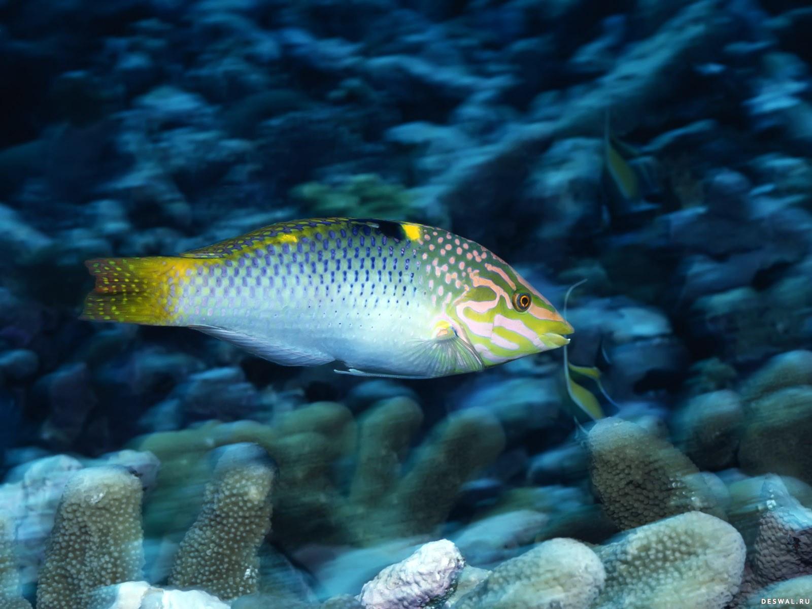 Фото 73. Нажмите на картинку с обоями подводного мира, чтобы просмотреть ее в реальном размере