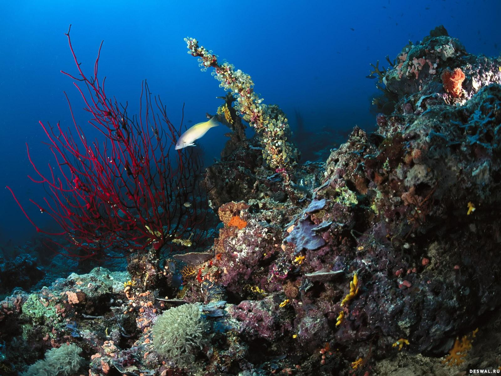 Фото 77. Нажмите на картинку с обоями подводного мира, чтобы просмотреть ее в реальном размере