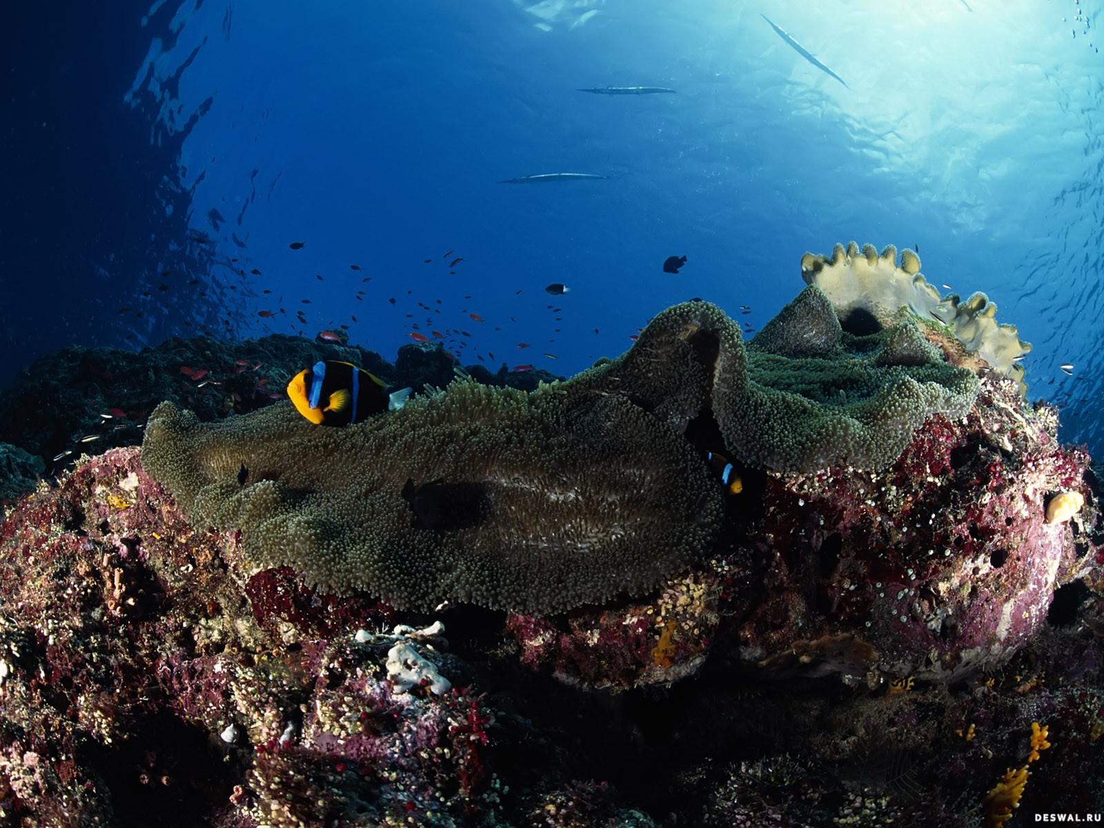 Фото 91. Нажмите на картинку с обоями подводного мира, чтобы просмотреть ее в реальном размере