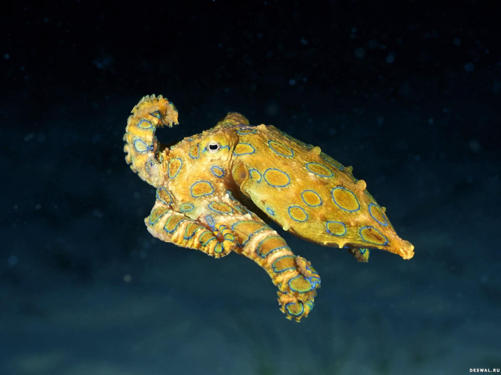 Фото 93. Нажмите на картинку с обоями подводного мира, чтобы просмотреть ее в реальном размере