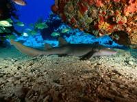 Фото 4. Обои для рабочего стола: обои с подводным миром
