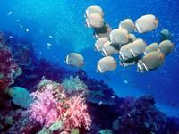Фото 10. Обои для рабочего стола: обои с подводным миром
