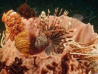 Фото 13. Обои для рабочего стола: обои с подводным миром