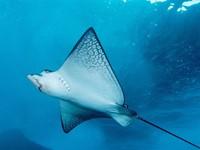 Скачать фото 18. Обои: подводный мир