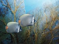 Фото 25. Обои для рабочего стола: обои с подводным миром