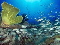 Фото 29. Обои для рабочего стола: обои с подводным миром