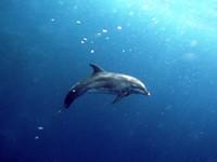 Фото 30. Обои для рабочего стола: обои с подводным миром