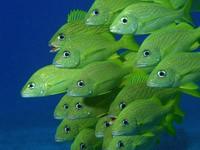 Фото 31. Обои для рабочего стола: обои с подводным миром