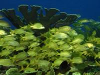 Фото 32. Обои для рабочего стола: обои с подводным миром