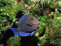 Фото 33. Обои для рабочего стола: обои с подводным миром