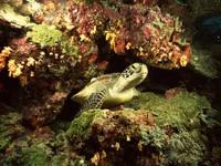 Скачать фото 35. Обои: подводный мир