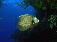 Фото 37. Обои для рабочего стола: обои с подводным миром