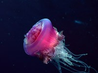 Фото 43. Обои для рабочего стола: обои с подводным миром