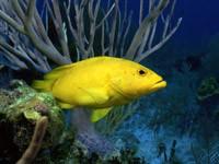 Фото 44. Обои для рабочего стола: обои с подводным миром