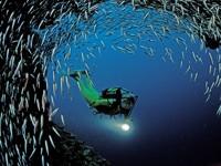 Фото 45. Обои для рабочего стола: обои с подводным миром