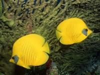 Фото 46. Обои для рабочего стола: обои с подводным миром