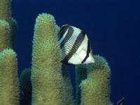 Фото 47. Обои для рабочего стола: обои с подводным миром