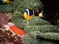 Фото 48. Обои для рабочего стола: обои с подводным миром