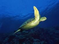 Фото 50. Обои для рабочего стола: обои с подводным миром