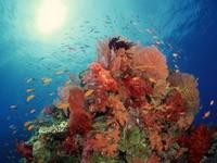 Фото 51. Обои для рабочего стола: обои с подводным миром