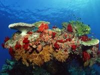 Фото 52. Обои для рабочего стола: обои с подводным миром