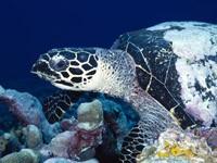 Фото 57. Обои для рабочего стола: обои с подводным миром