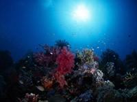 Фото 58. Обои для рабочего стола: обои с подводным миром