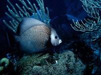 Фото 61. Обои для рабочего стола: обои с подводным миром