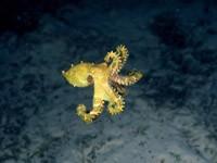 Фото 63. Обои для рабочего стола: обои с подводным миром