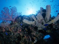 Фото 64. Обои для рабочего стола: обои с подводным миром