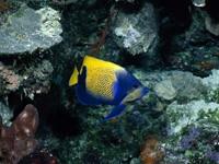 Фото 68. Обои для рабочего стола: обои с подводным миром