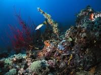 Фото 77. Обои для рабочего стола: обои с подводным миром