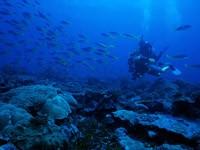 Фото 82. Обои для рабочего стола: обои с подводным миром
