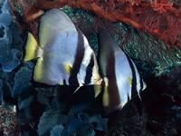 Фото 83. Обои для рабочего стола: обои с подводным миром