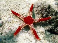 Фото 84. Обои для рабочего стола: обои с подводным миром