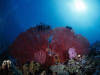 Фото 85. Обои для рабочего стола: обои с подводным миром
