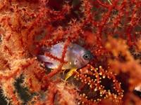 Фото 86. Обои для рабочего стола: обои с подводным миром