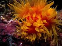 Фото 87. Обои для рабочего стола: обои с подводным миром