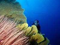 Фото 88. Обои для рабочего стола: обои с подводным миром