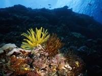 Фото 90. Обои для рабочего стола: обои с подводным миром