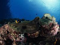 Фото 91. Обои для рабочего стола: обои с подводным миром