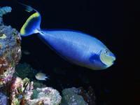 Фото 96. Обои для рабочего стола: обои с подводным миром